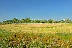 Pogodne łąki z drzewami pod jasnym niebieskim niebem w Kalkense Meersen natury reerve, Flandryjskim, Belgia obrazy royalty free