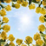 Pogodni tulipany Obrazy Royalty Free