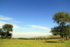 Pogodni wzgórza, lasy i obszary trawiaści, Zdjęcia Royalty Free