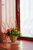 pogodny bukieta okno Zdjęcie Royalty Free