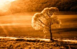 pogodny drzewo Zdjęcie Stock