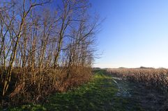 Pogodny jesień dzień w nizinie Zdjęcie Stock