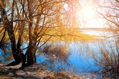 Pogodny jesień krajobraz - yellowed jesieni wierzba pod światłem słonecznym na banku mała rzeka przy jesień zmierzchem Fotografia Royalty Free