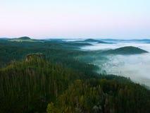 Pogodny jesień ranek nad śmierć las na skalistym wzgórzu Susi bagażniki wtykają up Obrazy Royalty Free