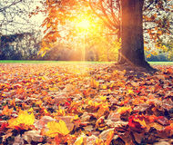 pogodny jesień ulistnienie Obraz Stock