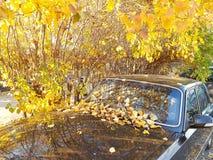 Pogodny jesień samochód zdjęcie royalty free