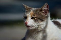 Pogodny kot Obrazy Stock