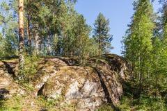 Pogodny krajobraz w północnym lesie Fotografia Royalty Free