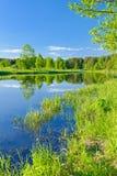 Pogodny krajobraz z Narew galonową rzeką. obraz stock
