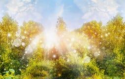 Pogodny lato natury tło z zielonymi drzewa ans słońca promieniami Fotografia Royalty Free
