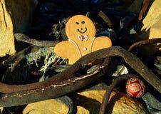 Pogodny miodownik w wysuszonym kelp na plaży, żółtych i czarnych bożych narodzeniach w Lipu, tło menchii i czerwieni Fotografia Royalty Free