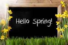 Pogodny narcyz, Chalkboard, tekst wiosna Cześć Zdjęcie Stock