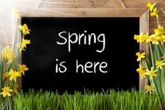 Pogodny narcyz, Chalkboard, tekst wiosna Jest Tutaj Obrazy Stock