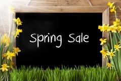Pogodny narcyz, Chalkboard, tekst wiosny sprzedaż Zdjęcie Royalty Free