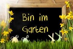 Pogodny narcyz, jajko, kosza Im Garten sposoby W ogródzie obrazy stock