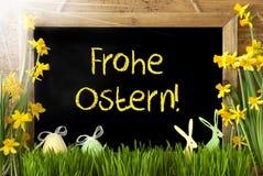 Pogodny narcyz, jajko, królik, Frohe Ostern Znaczy Szczęśliwą wielkanoc Fotografia Royalty Free