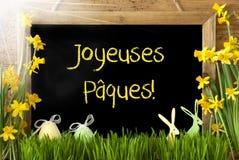 Pogodny narcyz, jajko, królik, Joyeuses Paques Znaczy Szczęśliwą wielkanoc Obrazy Stock