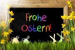 Pogodny narcyz, jajko, królik, Kolorowy Frohe Ostern Znaczy Szczęśliwą wielkanoc Fotografia Stock