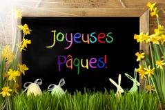 Pogodny narcyz, jajko, królik, Kolorowy Joyeuses Paques Znaczy Szczęśliwą wielkanoc Obrazy Stock