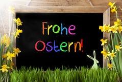 Pogodny narcyz, królik, Kolorowy Frohe Ostern Znaczy Szczęśliwą wielkanoc Obrazy Royalty Free