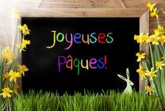 Pogodny narcyz, królik, Kolorowy Joyeuses Paques Znaczy Szczęśliwą wielkanoc Zdjęcie Royalty Free
