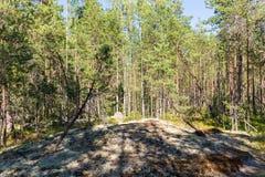 Pogodny północny las Obrazy Stock