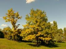 Pogodny parkowy popołudnie Fotografia Royalty Free