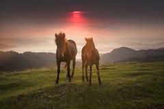 Pogodny ranek i bezpłatni konie pasamy na wierzchołku wśród dzikich Karpackich panoram Ukraina dla zimy, i wszystkie jesień i lat obrazy stock