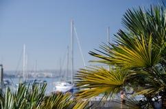Pogodny ranek przy portu morskiego marina blisko śródmieścia, San Diego Fotografia Royalty Free