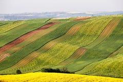 Pogodny ranek przy zielonymi i żółtymi wiosen polami zdjęcia stock
