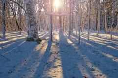 Pogodny ranek w zima lesie fotografia stock