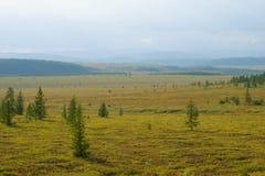 Pogodny Sierpniowy dzień w Yamal tundrze Biegunowy region, Rosja obraz royalty free