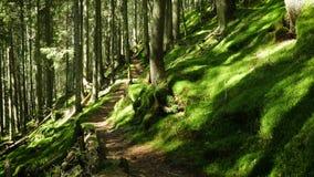 Pogodny sosnowy las z promieniami s?o?ce za drzewo baga?nikami zdjęcie wideo