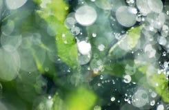 Pogodny waterdrops tło Zdjęcia Royalty Free