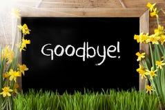 Pogodny wiosna narcyz, Chalkboard, tekst Do widzenia Zdjęcie Stock