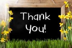 Pogodny wiosna narcyz, Chalkboard, tekst Dziękuje Ciebie Obrazy Stock