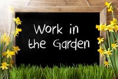 Pogodny wiosna narcyz, Chalkboard, tekst praca W ogródzie Obraz Royalty Free