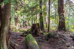 Pogodny zielony las tropikalny z murawą i belami obrazy royalty free