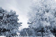 Pogodny zima dzień w lesie n5 Zdjęcia Royalty Free