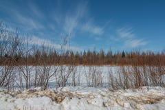 Pogodny zima dzień w saksofonu bagnie z śniegiem, gałąź od krzaków, las i żywi niebieskie nieba, zdjęcie royalty free
