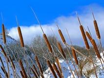 Pogodny zima dzień Fotografia Royalty Free