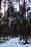 Pogodny zima dzień w lesie zdjęcie stock