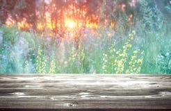 Pogodny zmierzch nad lasu i wildflowers t?em zdjęcia stock