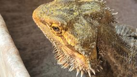 Pogona dricksvatten stock video