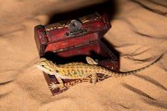 Free Pogona Vitticeps Lizard. Australian Bearded Dragon Lizard. Agama Lizard Lies In An Open Treasure Chest On A Sand Royalty Free Stock Image - 184935646