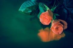 Pogrzeb karta z różami zdjęcie stock