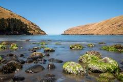 Pohatu Marine Reserve Royaltyfri Fotografi