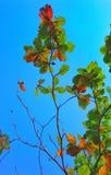 Pohon разглагольствования Стоковые Фотографии RF