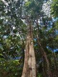 Pohon Induk Bitti fotos de archivo
