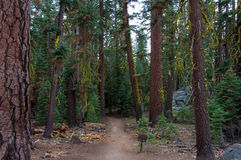 Pohono trail in the forest, Yosemite National Park California USA Stock Photo